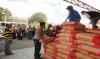 Venezolana de Cementos lleva el cemento al pueblo